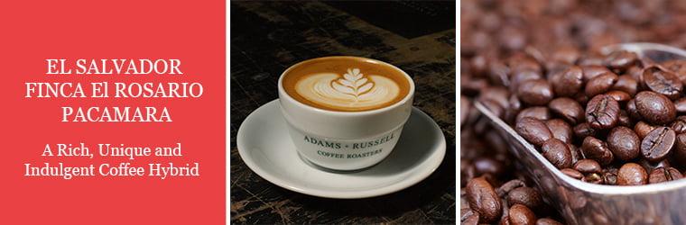 El Salvador Finca El Rosario Pacamara Coffee