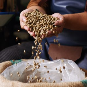 Beginners guide to buying green coffee beans