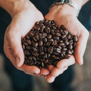 Types of coffee beans and their characteristics (Arabica, Robusta, Liberica)