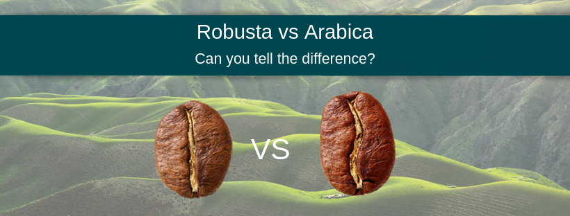 Arabica vs Robusta appearance