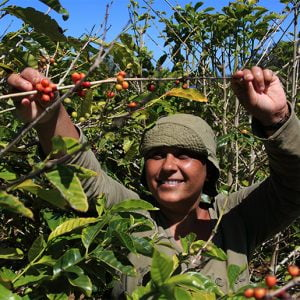 What is Fair Trade Coffee? Where the beans come from & the benefits