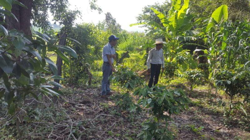 Mexican-Coffee-Chiapas-Teresa-Coffee-Farmers