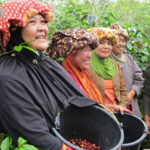 Women in the Coffee Industry: Programmes, Platforms and Power