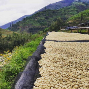 Ethiopian Coffee – The Ceremony & Growing Regions