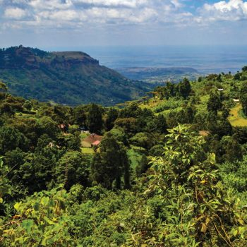 Peaberry Coffee Beans in Kenya Featured